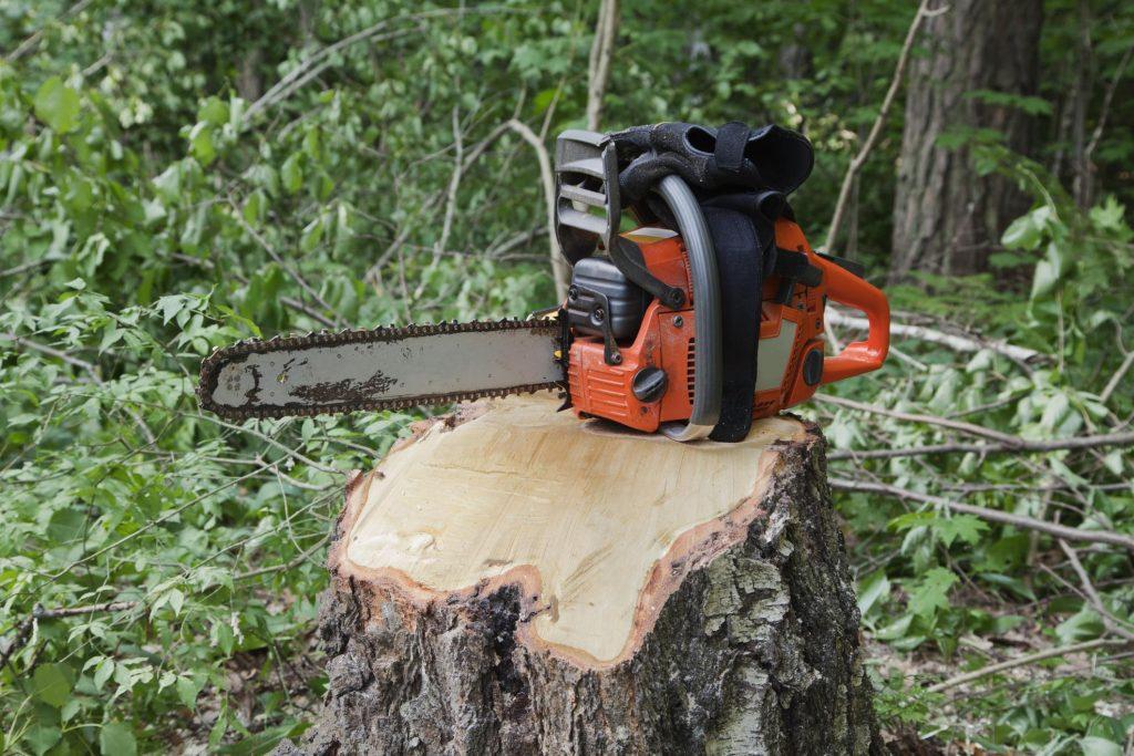 Norwalk Tree Service Pros - Stump Grinding 1