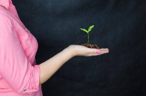 how to plant tree seeds