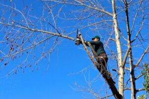 how to trim trees yourself