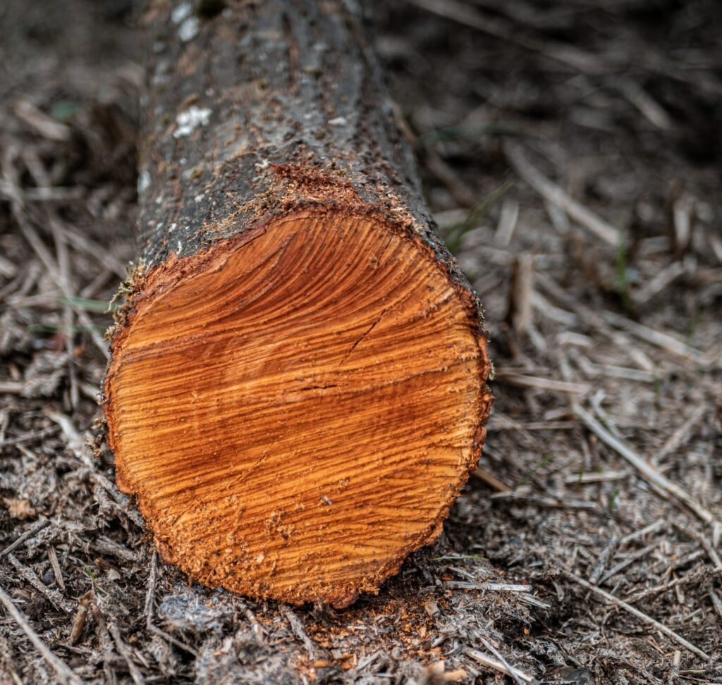 common tree removal risks