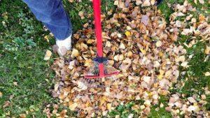 easiest way to clean up stump grindings