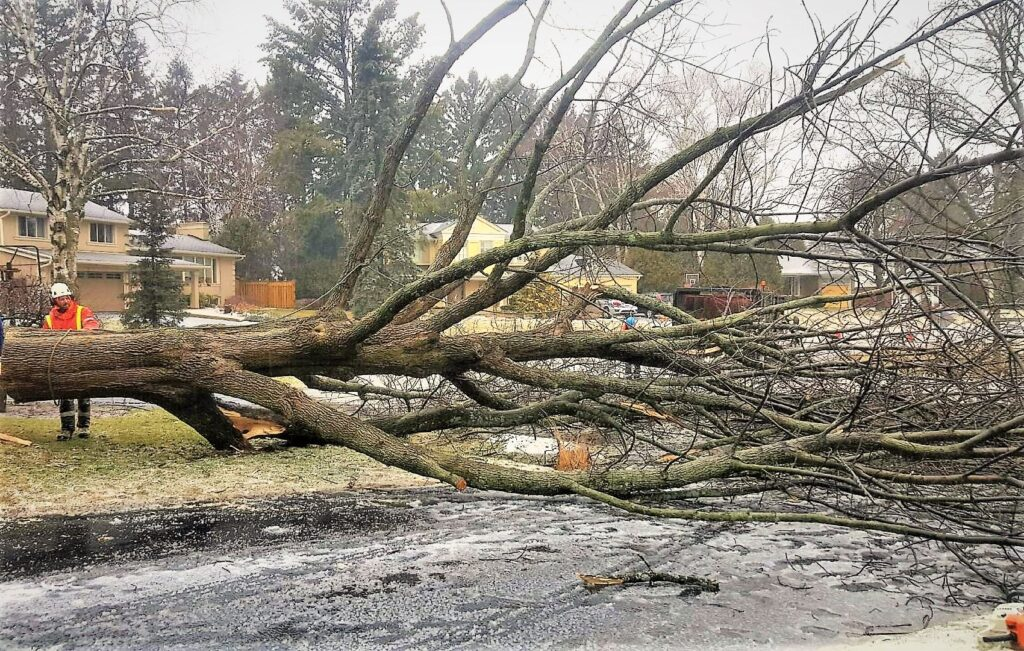 5 tips to prevent tree damage during bad weather
