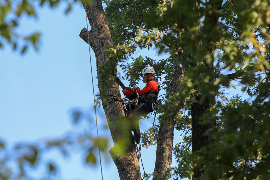 5 things to do before a tree removal