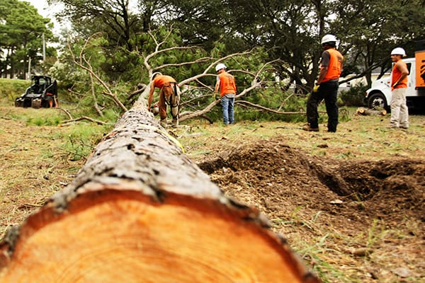 questions to ask your tree service