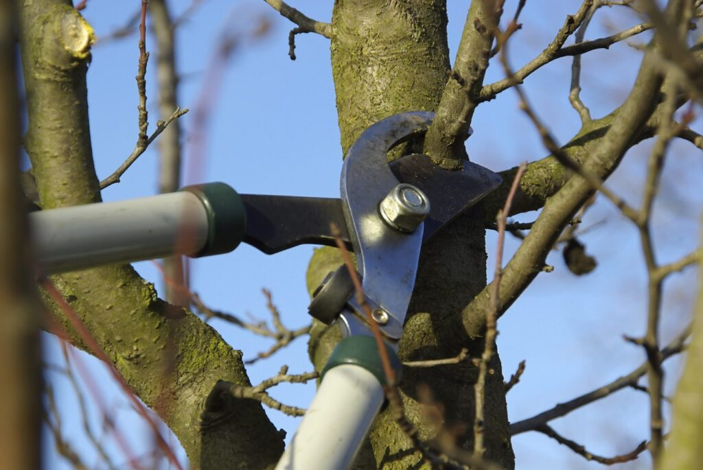 tree pruning choosing the right time