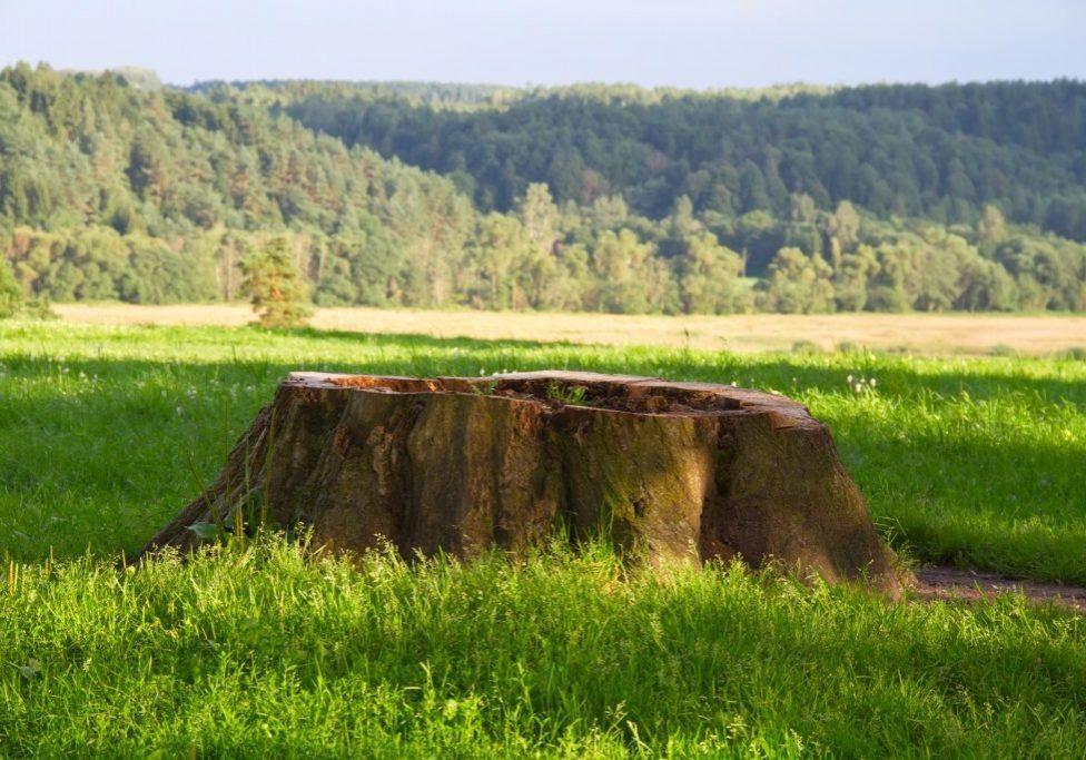 Danbury Tree Service Pros Tree Removal