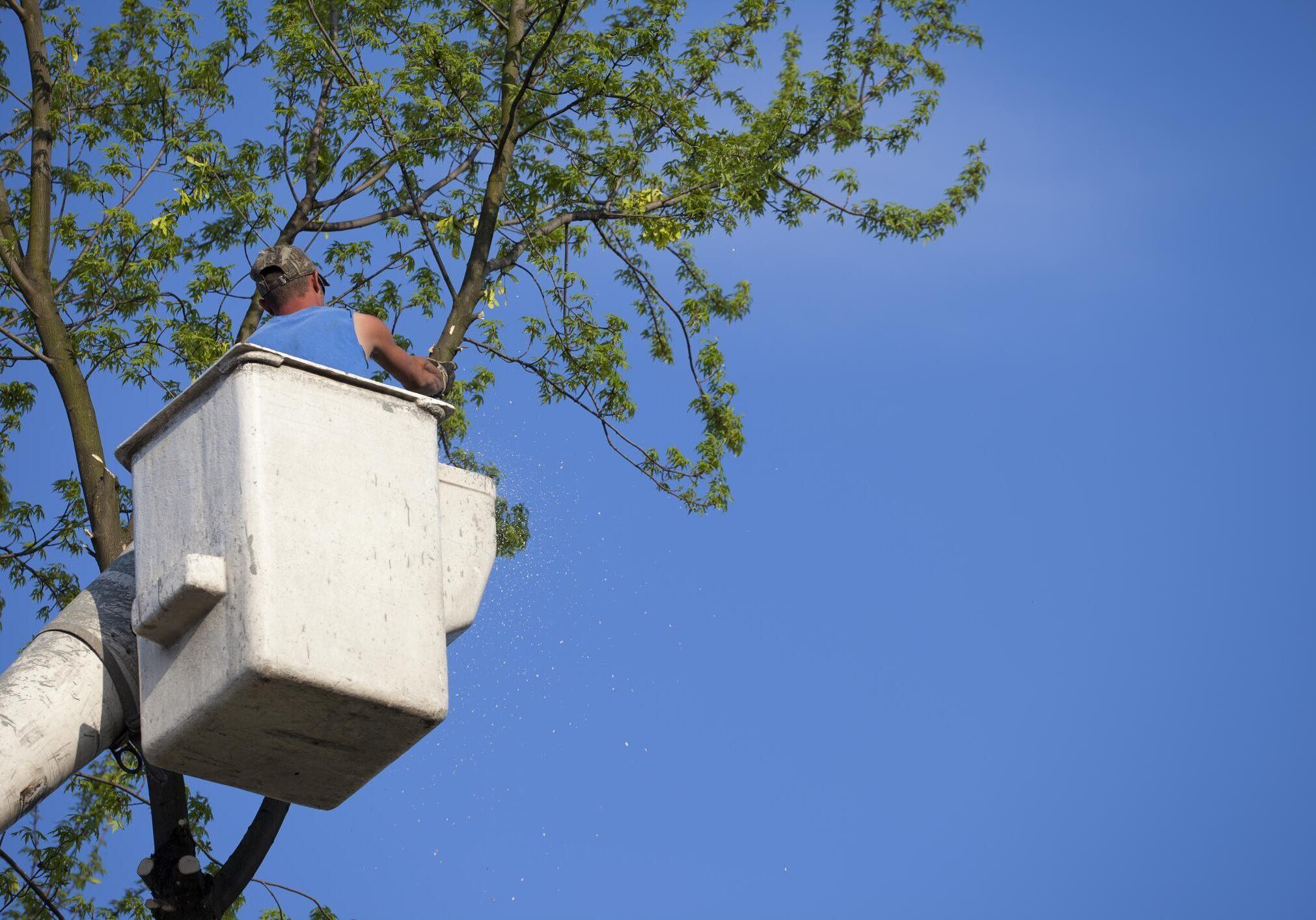 Danbury Tree Service Pros Tree Trimming