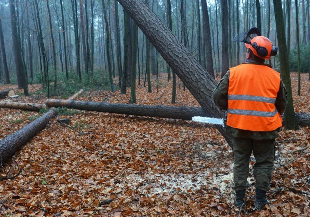 affordable land clearing and site prep