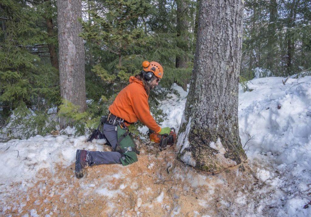 local tree service company